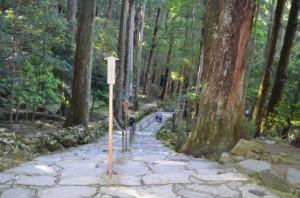 森の中の参道
