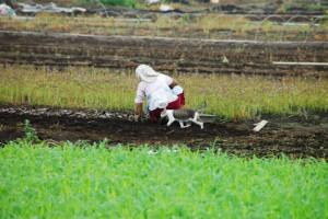 畑で作業するおばさん