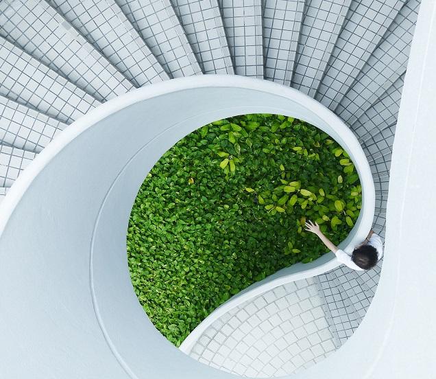 【植えるだけ】壁や屋上の緑化で補助金を受けよう!